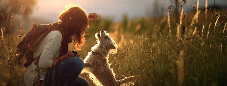 子犬とあなたが共に成長する上で大事な事