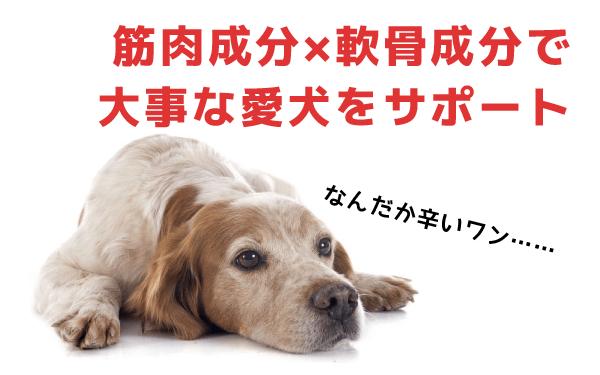 筋肉成分×軟骨成分で大事な愛犬をサポート