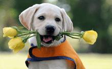 犬用サプリメントの種類