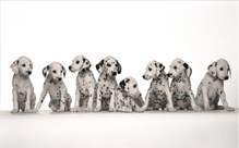 犬用サプリメントを選ぶポイント