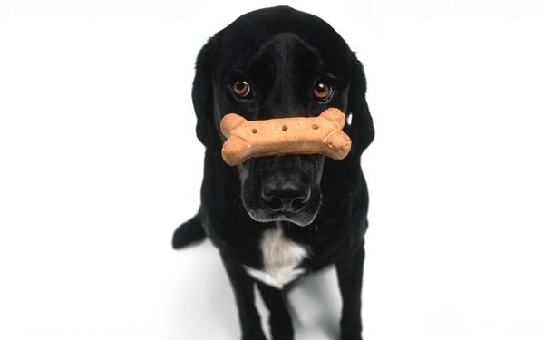 犬に玉ねぎは危険? 中毒症状や食べてしまった時の対処法