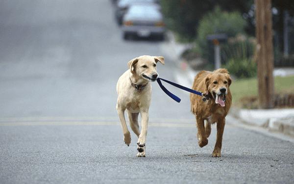 小型犬から大型犬まで散歩のしつけ方法おさらい
