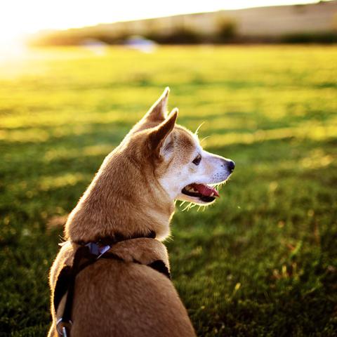 犬の散歩のしつけ方や悩みについてまとめました。