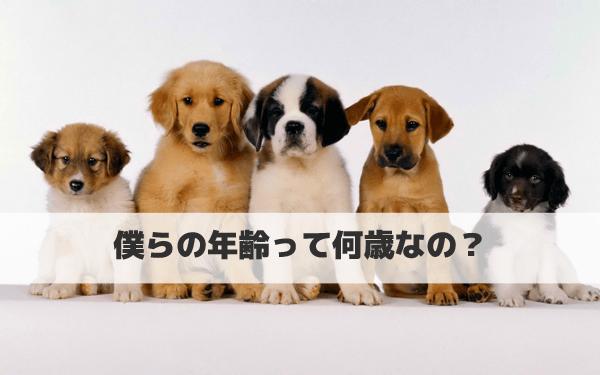 犬の年齢の数え方、早見表公開!