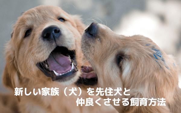 新しい家族(犬)を先住犬と仲良くさせる飼育方法