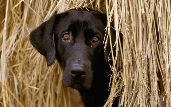 犬のイボは悪性腫瘍?イボできる原因と取り方