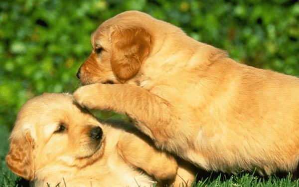 子犬が甘噛みしてくる本当の理由とやめさせる方法