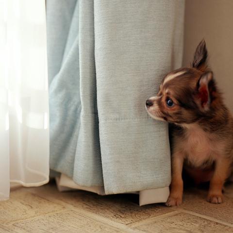 子犬が極度の不安症の場合