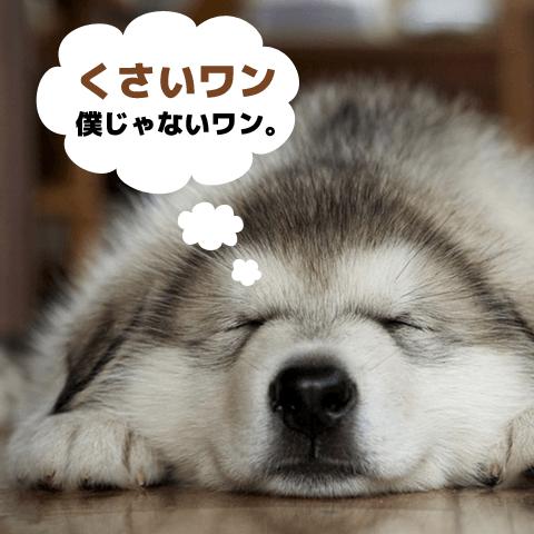 犬のおなら改善方法