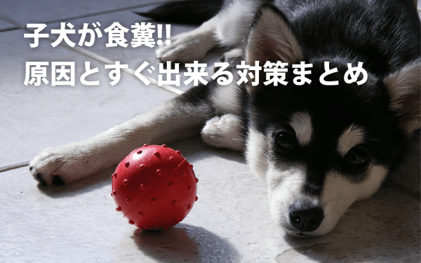子犬が食糞!原因とすぐ出来る対策まとめ