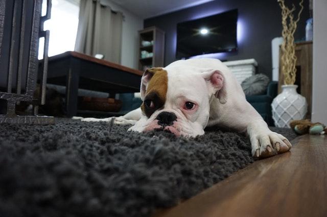床やフローリングを掘る行為をやめさせる方法