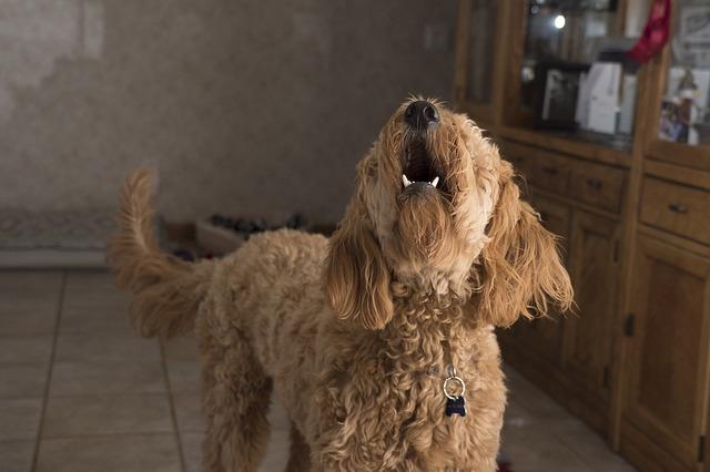 犬が吠えるのをやめさせる方法は? 原因別のしつけ方!