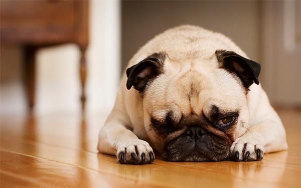 【しょんぼり】オス犬の去勢手術の術後のケア方法まとめ