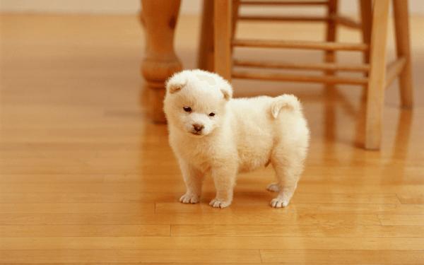 愛犬がうれしょんをする原因と正しい治し方を解説!