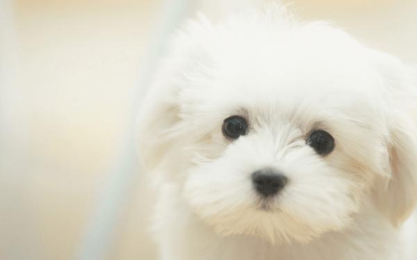 犬の水頭症を疑う症状と原因、治療法まとめ