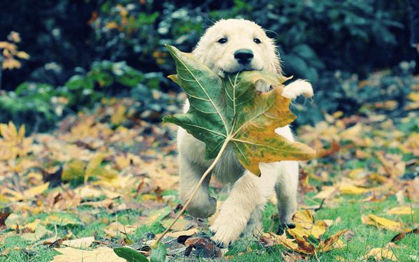 犬が草を食べる理由は? 食べてはいけない草もある!