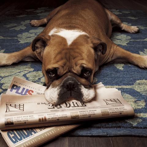 犬の服従を表す感情表現