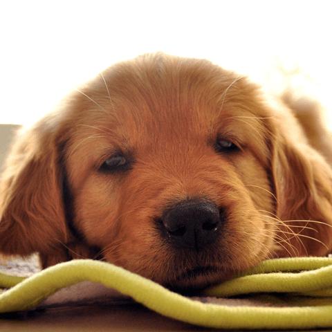犬が軟便になる理由と考えられる危険性について