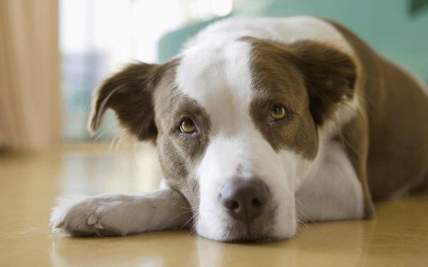 足が衰えはじめた老犬のリハビリ方法や病気の可能性