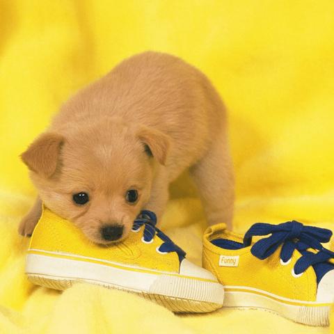 犬のうれしょんの治し方・対策