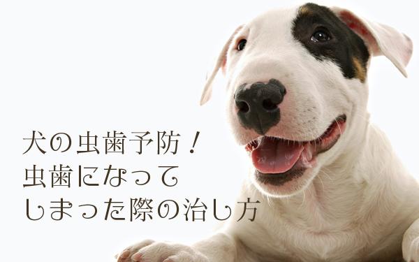 犬の虫歯の原因、治し方と予防方法まとめ
