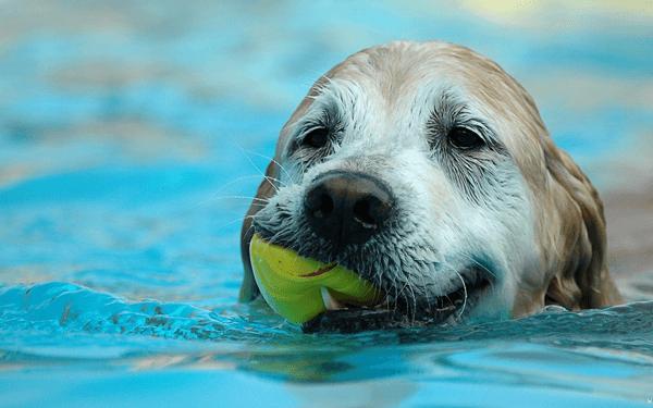 犬のお風呂の入れ方と頻度についておさらい