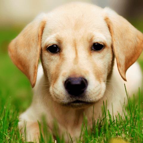 犬の飛行機に乗る際に知っておきたい事まるわかり!