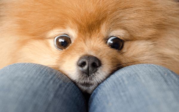 子犬や老犬の分離不安をトレーニングで改善しよう!