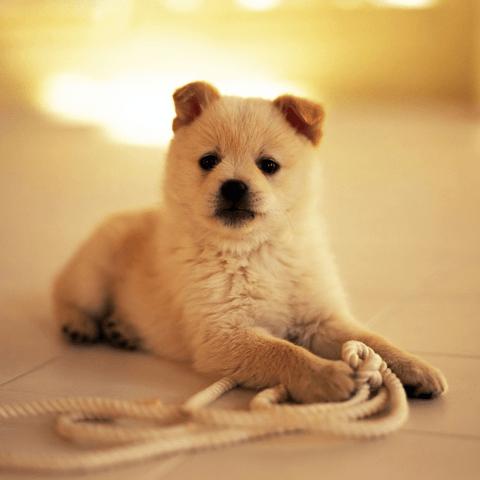犬の分離不安の治し方、対処法