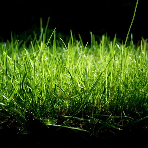 食べてはいけない草について