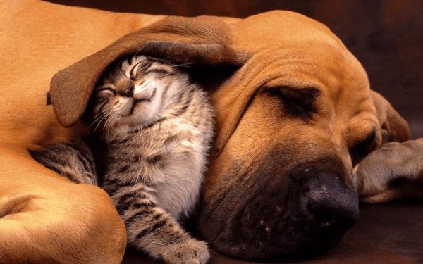 犬が耳ダニに感染した時の治療法と予防方法まとめ