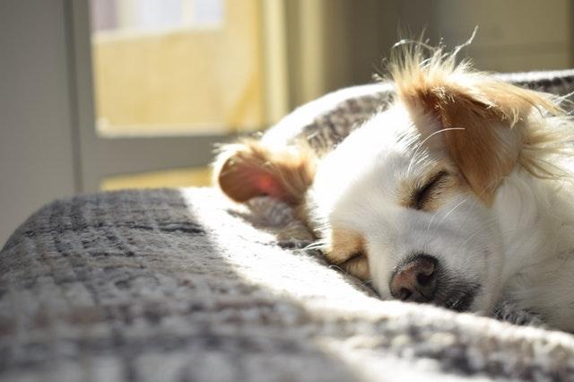 犬が鼻血を出した時の原因と対処法を知ろう