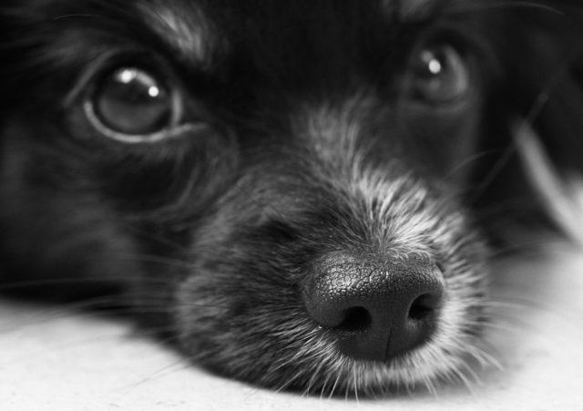 愛犬のニキビなどの皮膚トラブルについて