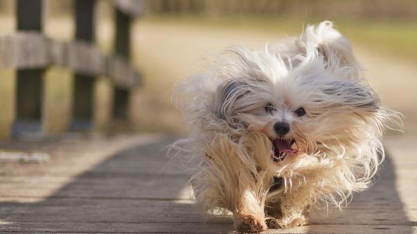 愛犬をノーリードで散歩させるべきでない4つの理由