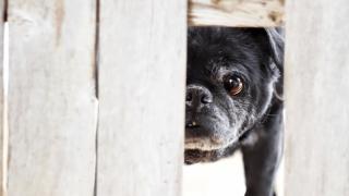 迷い犬を保護したら? 保護の仕方や飼い主の探し方まとめ