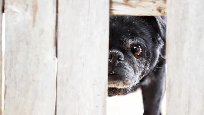 迷い犬を保護したら? 拡散、連絡先、取るべき行動まとめ
