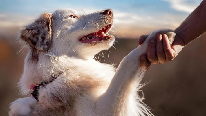 犬の毛の生え替え変わりの時期に飼い主ができる事