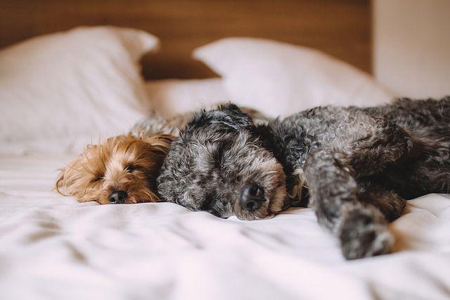 知ってる? 犬と一緒に寝るときの危険性まとめ