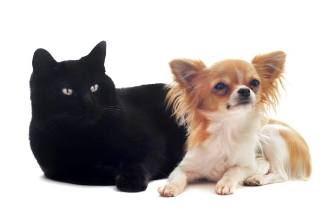 犬と猫は意外に仲良し? 同居させる時の環境づくり