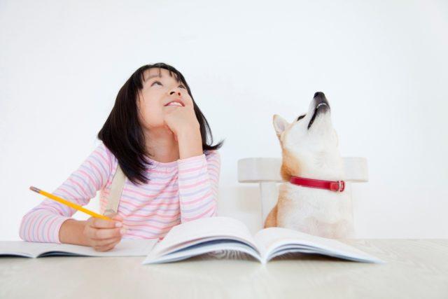 犬と猫が仲良く暮らすための環境づくり