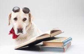 ギネス認定されたハイスペックな犬たち!