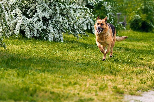 犬のマイクロチップの埋め込む場所、費用や住所変更方法