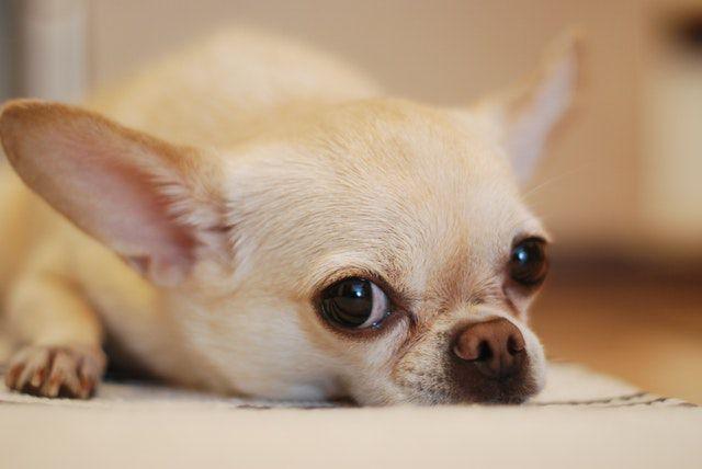うちの犬、痩せすぎ? 判断基準と原因まとめ