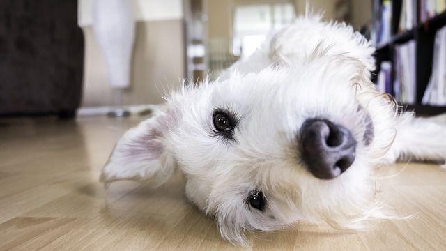 犬を部屋飼いするときに工夫したいポイントまとめ