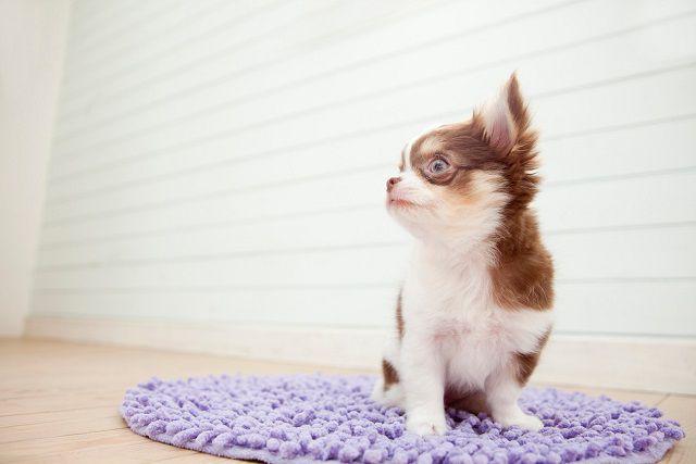 もしもの災害に! 愛犬のために備えておきたいことや災害グッズ