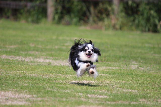 愛犬がドッグランで遊ばない・走らないのはなぜ?