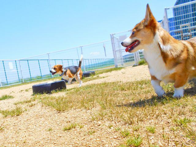 愛犬にあった遊び方、楽しみ方を見つけることが大事