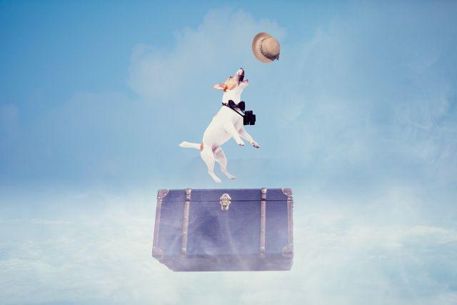 愛犬連れのお泊り旅行で準備しておきたいアイテム3選
