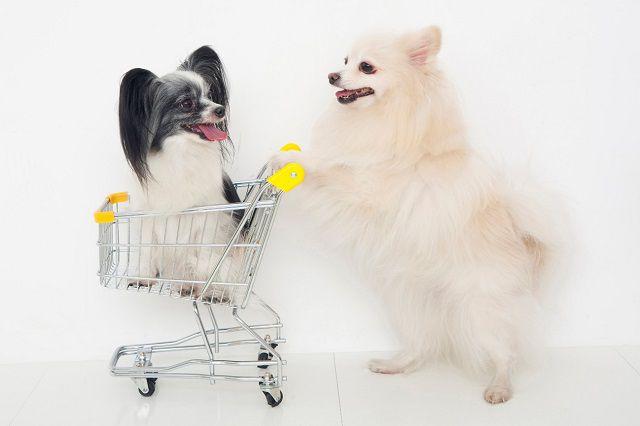 便利なネット通販で愛犬用品を購入する時に気をつけること