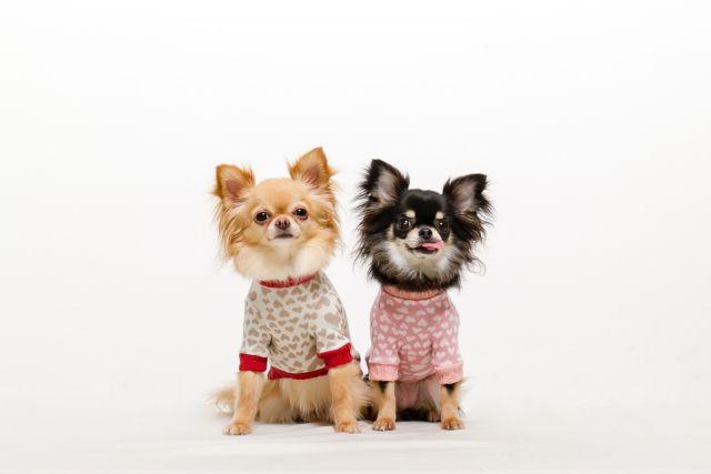 愛犬のための寒さ対策! 留守番中や老犬にできること